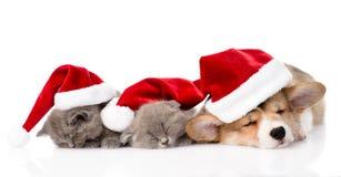 Pembroke Welsh Corgi-puppy met rode santahoeden en twee katjes Geïsoleerde Stock Fotografie