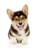 Pembroke Welsh Corgi puppy sitting. Stock Photography