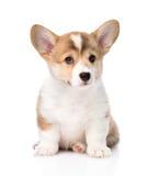 Pembroke Welsh Corgi-puppyzitting vooraan Geïsoleerde stock afbeeldingen