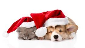 Pembroke Welsh Corgi valp och kattunge med röda santa hattar som tillsammans sover isolerat Arkivfoton