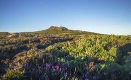 Φυσική ενδοχώρα στο εθνικό πάρκο ακτών Pembrokeshire, UK στοκ φωτογραφία με δικαίωμα ελεύθερης χρήσης