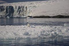 Península Antartica del la del en de Tempanos Imagen de archivo libre de regalías