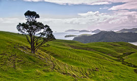 Península de Coromandel Imagem de Stock Royalty Free