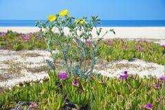 Península de Greece - de Sithonia Foto de Stock Royalty Free
