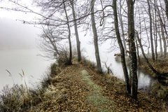 Península no lago na névoa Foto de Stock Royalty Free