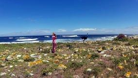 Península salvaje del cabo de la avestruz almacen de metraje de vídeo