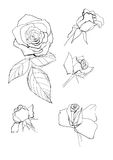 Pen drawing roses collection Royalty Free Stock Photography