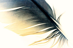 Pen feather Stock Images