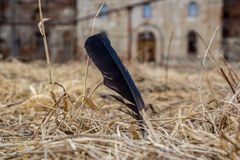 Pen. Feather in the dry grass Stock Photos