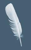 Pen feather Royalty Free Stock Photos