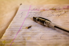 Pen and a fly on a  paper Stock Image