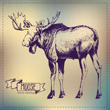 Pen graphics vector moose drawing Stock Images