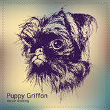 Pen graphics vector puppy griffon drawing Royalty Free Stock Image