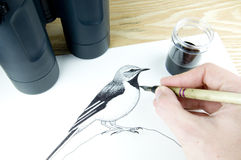 Pen and ink illustrator Stock Photos