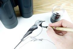 Pen and ink illustrator. Drawing a bird Stock Photos