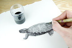 Pen and ink illustrator. Drawing a terrapin stock image