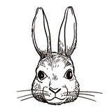 Pen and ink rabbit head sketch Stock Photo