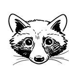 Pen and ink raccoon head sketch Royalty Free Stock Photo