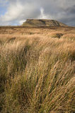 Pen-y-Ghent in distance behind moors in Yorkshire Dales Royalty Free Stock Photography