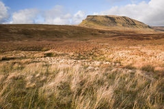 Pen-y-Ghent seen from Pennine Way over moor land in Yorkshire  Stock Photo