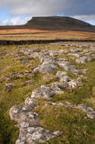 Pen-y-Ghent in Yorkshire Dales National Park viewed across limes Stock Image