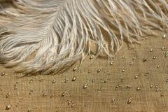 Pena branca da avestruz com gota da água fotos de stock royalty free