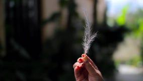 Pena branca em uma mão fêmea que torna-se no vento video estoque