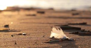 Pena branca fundida pelo vento no Sandy Beach vídeos de arquivo