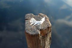 Pena calma no suporte de madeira da vara na água Fotos de Stock Royalty Free
