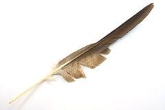 Pena da águia Fotografia de Stock