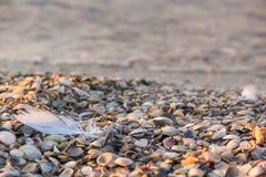 Pena da gaivota no litoral que é escudos cobertos na areia após a tempestade fotos de stock royalty free