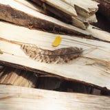 Pena da galinha na madeira desbastada imagem de stock royalty free