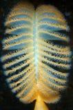Pena de mar Fotografia de Stock