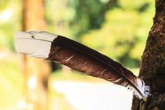 Pena de pássaro Imagem de Stock Royalty Free