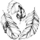 Pena de pássaro do vetor da asa isolada Elemento isolado da ilustração Ilustração do Vetor