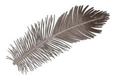 Pena de pássaro Imagens de Stock