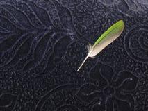 Pena de quill verde do pássaro no fundo azul de veludo fotografia de stock