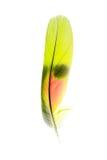 Pena do papagaio foto de stock royalty free