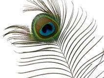 Pena do pavão. Imagens de Stock