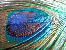 Pena do pavão   Imagem de Stock