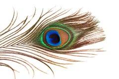 Pena do pavão Imagem de Stock Royalty Free