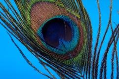 Pena do pavão foto de stock