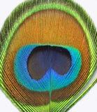 Pena do pavão fotografia de stock