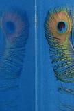 Pena do pavão Imagens de Stock