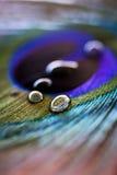 Pena do pavão com gotas da água fotografia de stock