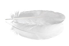 Pena do pombo no branco Imagens de Stock