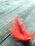 Pena vermelha em de madeira velho Fotografia de Stock Royalty Free