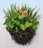Penacho de la hierba Imagen de archivo