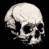 Penacho de la mano de un cráneo humano Foto de archivo libre de regalías