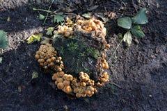 Penacho del azufre Foto de archivo libre de regalías